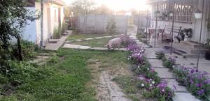 Schwein im Garten