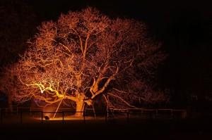 Winterlichter Luisenpark_006130