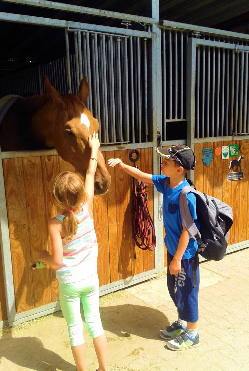 Nick & Pferd