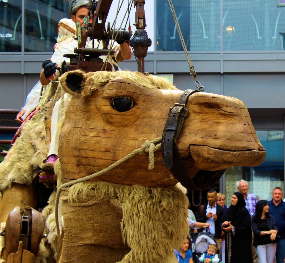 Kamel 33